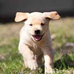 happy-puppy-email-us