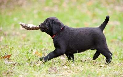 blk-pup